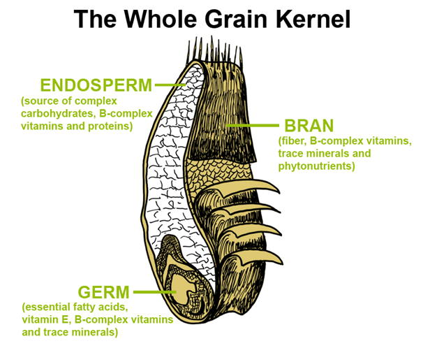Wheat Germ Kernal