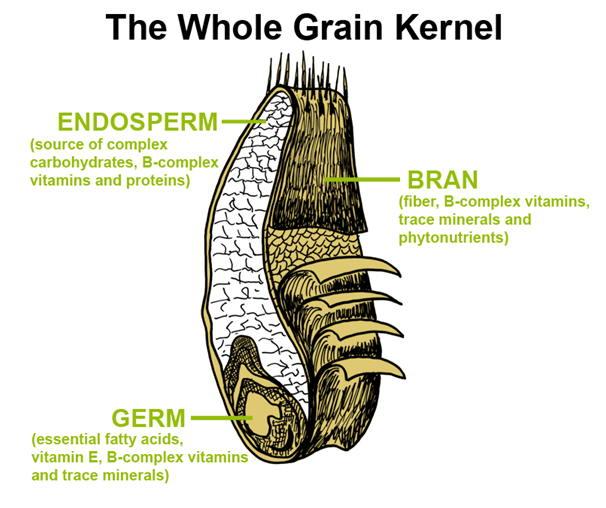 Wheat Germ Kernal